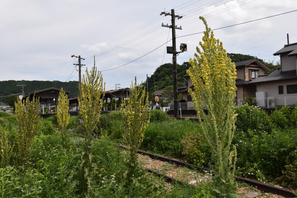 2020.06.15ペレ二アルガーデン・バーバスカム
