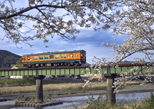 鉄橋桜トンネル